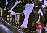 Image of Milk production United States USA, 1958, second 1 stock footage video 65675020868