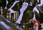Image of Milk production United States USA, 1958, second 2 stock footage video 65675020868
