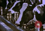Image of Milk production United States USA, 1958, second 3 stock footage video 65675020868