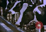 Image of Milk production United States USA, 1958, second 4 stock footage video 65675020868