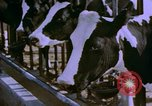 Image of Milk production United States USA, 1958, second 6 stock footage video 65675020868