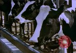 Image of Milk production United States USA, 1958, second 7 stock footage video 65675020868