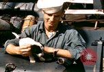 Image of Puppy in life preserver United Kingdom, 1944, second 2 stock footage video 65675020899