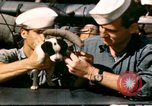 Image of Puppy in life preserver United Kingdom, 1944, second 11 stock footage video 65675020899