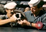 Image of Puppy in life preserver United Kingdom, 1944, second 12 stock footage video 65675020899
