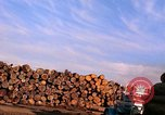 Image of log piles California United States USA, 1967, second 12 stock footage video 65675020971