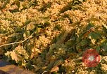Image of grapes California United States USA, 1967, second 9 stock footage video 65675020972