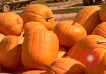 Image of pile of newly picked pumpkins California United States USA, 1967, second 1 stock footage video 65675020973