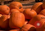 Image of pile of newly picked pumpkins California United States USA, 1967, second 3 stock footage video 65675020973