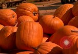 Image of pile of newly picked pumpkins California United States USA, 1967, second 10 stock footage video 65675020973