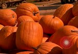 Image of pile of newly picked pumpkins California United States USA, 1967, second 11 stock footage video 65675020973