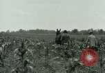 Image of Prisoner of War Camp Southern United States USA, 1944, second 10 stock footage video 65675021140