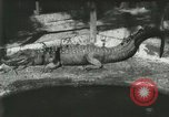 Image of Alligator Farm Washington DC USA, 1916, second 2 stock footage video 65675021534