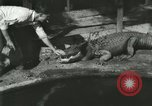 Image of Alligator Farm Washington DC USA, 1916, second 12 stock footage video 65675021534