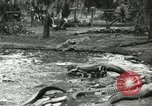 Image of Alligator Farm Washington DC USA, 1916, second 10 stock footage video 65675021536