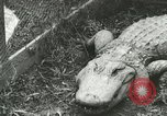 Image of Alligator Farm Washington DC USA, 1916, second 1 stock footage video 65675021537