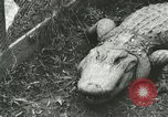 Image of Alligator Farm Washington DC USA, 1916, second 2 stock footage video 65675021537