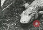 Image of Alligator Farm Washington DC USA, 1916, second 3 stock footage video 65675021537