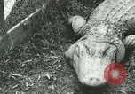 Image of Alligator Farm Washington DC USA, 1916, second 4 stock footage video 65675021537