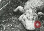 Image of Alligator Farm Washington DC USA, 1916, second 5 stock footage video 65675021537