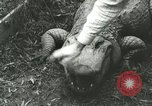 Image of Alligator Farm Washington DC USA, 1916, second 7 stock footage video 65675021537