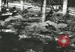 Image of Alligator Farm Washington DC USA, 1916, second 2 stock footage video 65675021538