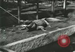 Image of Alligator Farm Washington DC USA, 1916, second 5 stock footage video 65675021538