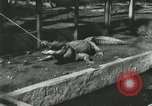 Image of Alligator Farm Washington DC USA, 1916, second 6 stock footage video 65675021538