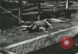 Image of Alligator Farm Washington DC USA, 1916, second 7 stock footage video 65675021538