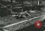 Image of Alligator Farm Washington DC USA, 1916, second 8 stock footage video 65675021538