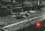 Image of Alligator Farm Washington DC USA, 1916, second 10 stock footage video 65675021538
