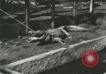 Image of Alligator Farm Washington DC USA, 1916, second 11 stock footage video 65675021538