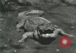 Image of Alligator Farm Washington DC USA, 1916, second 12 stock footage video 65675021538