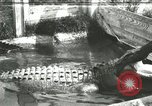 Image of Alligator Farm Washington DC USA, 1916, second 1 stock footage video 65675021539