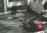 Image of Alligator Farm Washington DC USA, 1916, second 3 stock footage video 65675021539