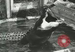 Image of Alligator Farm Washington DC USA, 1916, second 5 stock footage video 65675021539