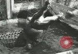 Image of Alligator Farm Washington DC USA, 1916, second 7 stock footage video 65675021539