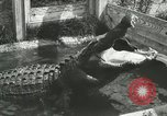 Image of Alligator Farm Washington DC USA, 1916, second 8 stock footage video 65675021539