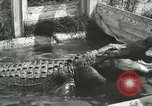 Image of Alligator Farm Washington DC USA, 1916, second 9 stock footage video 65675021539