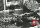 Image of Alligator Farm Washington DC USA, 1916, second 10 stock footage video 65675021539