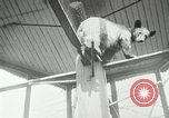 Image of wild animals Washington DC USA, 1921, second 9 stock footage video 65675021542