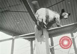Image of wild animals Washington DC USA, 1921, second 10 stock footage video 65675021542
