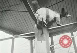 Image of wild animals Washington DC USA, 1921, second 11 stock footage video 65675021542