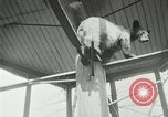 Image of wild animals Washington DC USA, 1921, second 12 stock footage video 65675021542