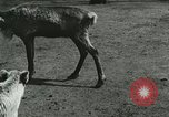 Image of wild animals Washington DC USA, 1921, second 6 stock footage video 65675021543