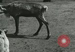 Image of wild animals Washington DC USA, 1921, second 7 stock footage video 65675021543