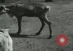 Image of wild animals Washington DC USA, 1921, second 8 stock footage video 65675021543