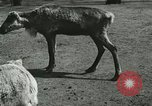 Image of wild animals Washington DC USA, 1921, second 10 stock footage video 65675021543
