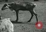 Image of wild animals Washington DC USA, 1921, second 11 stock footage video 65675021543