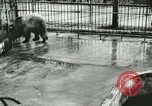 Image of wild animals Washington DC USA, 1921, second 5 stock footage video 65675021544